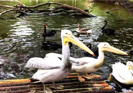 威海刘公岛+海驴岛+西霞口野生动物园 动车 3日游